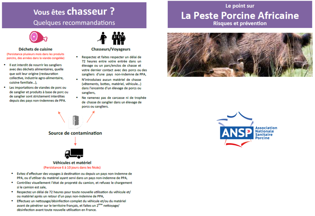 Peste_porcine_africaine_recommandations_chasseurs