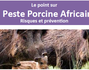 Peste_porcine_africaine_titre